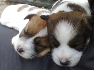 Visual distraction: Look, puppies!
